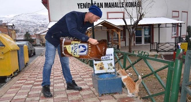 Bozüyük Belediyesi sokak hayvanlarının aç ve susuz kalmalarına engel oluyor
