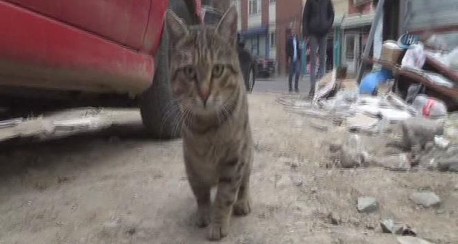 Bacağı kesilen kedi, engelleri hayvanseverlerin yardımı ile aştı