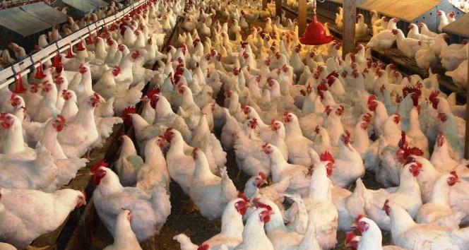Hortlayan kuş gribi Türkiyeye yaradı, ihracat arttı