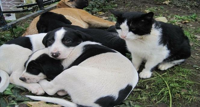 Çocuklara 'sokak hayvanlarını koruma bilinci' anlatılacak
