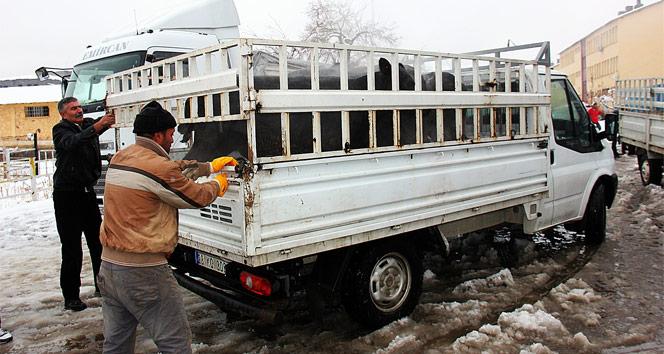 Bingölde çiftçilere hayvan desteği