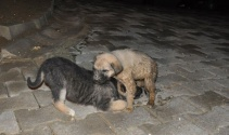 Foseptik çukuruna düşen köpeği itfaiye kurtardı