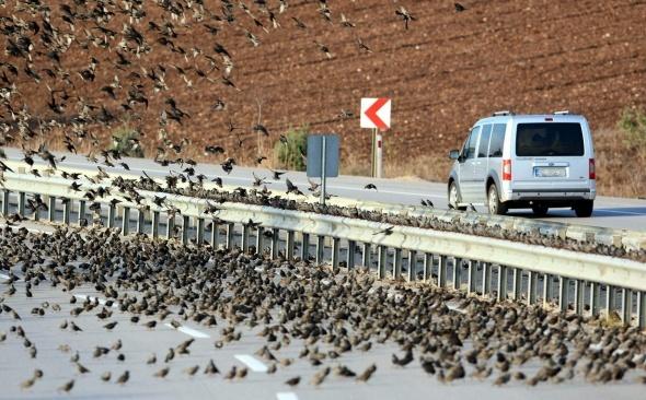 Soğuk onları da vurdu, binlercesi kara yolunu kapattı...