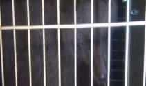 Kamyonun çarptığı yavru ayı hayata tutunamadı