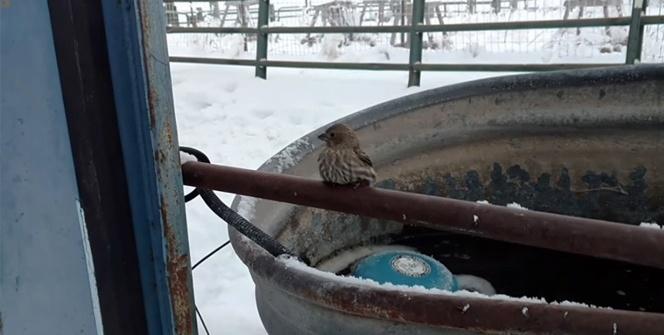 Dondurucu soğukta kuşun ayakları demire yapıştı