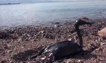 İzmit Körfezi'nde yakıt sızıntısı felaketi