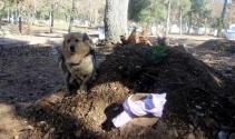Vefakar köpek, her gün ölen sahibinin mezarına koşuyor