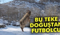 Bu teke doğuştan futbolcu