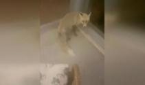 Köpeklerden kaçan tilki lokantaya girdi