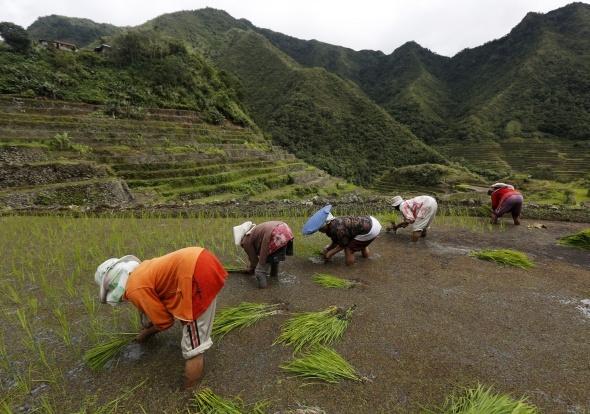 Filipinler'in pirinç taraçaları göz kamaştırıyor