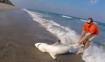 Köpek balığı kurtarma operasyonu