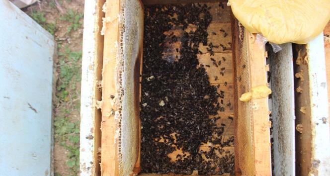 Yüzlerce kovan arı zehirlendi