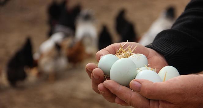 Tavuk yumurtası üretimi Ağustos'ta yüzde 2,9 arttı