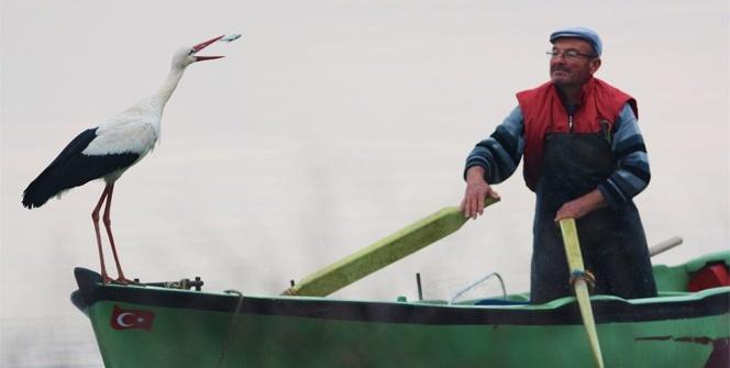 Leylek ve balıkçının La Fontaine masallarını aratmayan buluşması