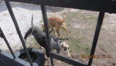 Köpek dövüşüne hayvanseverlerden tepki