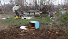 Tokatta arı kovanlarına ayı saldırısı