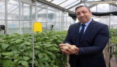 Pırlak: Yerli patates tohumları çiftçinin maliyetini aşağı düşürecek