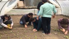 Düzce Üniversitesi öğrencilerinden organik tarım üretimi