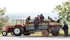 Damızlık kıl keçisi tekeleri üreticilere dağıtılıyor