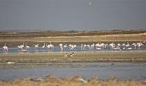 Su oranı arttı kuşlar Seyfe Gölüne aktı