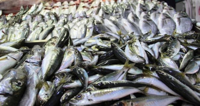 Av yasağı balık fiyatlarını yükseltti