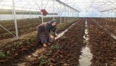 Samsunda Genç Çiftçi desteği alanlardan yüzde 76sı kadın