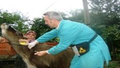 Samsunda şap hastalığı ile mücadele
