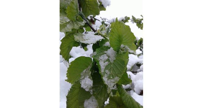 Yığılcada 23 Nisan kutlamalarına kar engeli