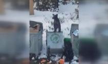 Uludağda aç kalan ayı çöpte yiyecek aradı