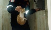 Binanın havalandırma boşluğunda sıkışan kediler kurtarıldı
