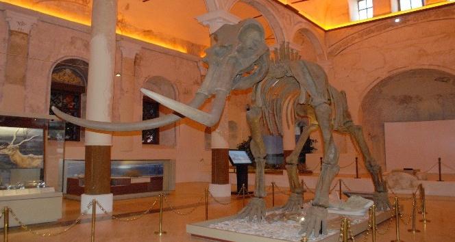 2 milyon yıllık fosiller Burdur'da sergileniyor