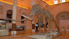 2 milyon yıllık fosiller Burdurda sergileniyor