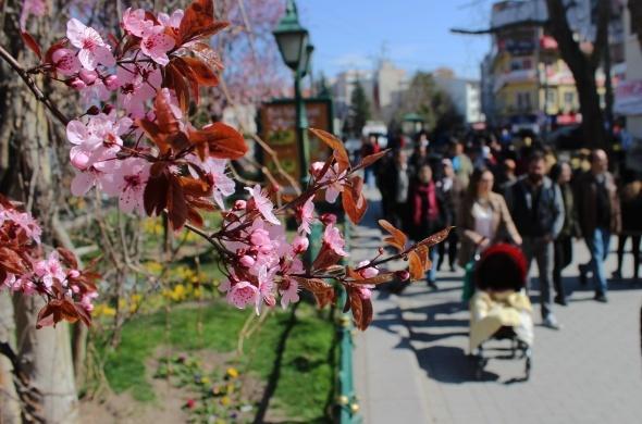 Eskişehir'de kartpostallık bahar görüntüleri
