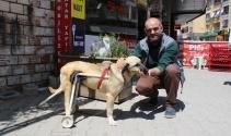 Duyarlı esnaftan felçli köpeğe yürüteç