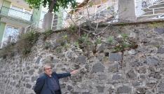 Duvarda yetişen incir ağacı meyve verdi