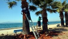 Aliağada palmiyelere bahar makyajı