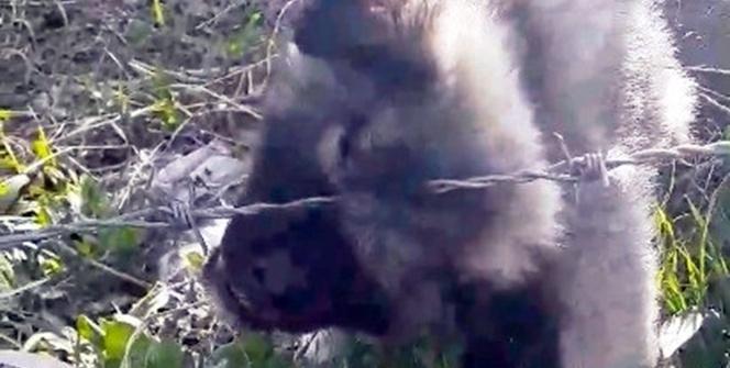 Erciş'te yavru köpek kurtarma operasyonu