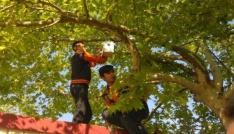 """Öğrenciler, """"Kuşlar Yuvaya"""" projesini hayata geçirdi"""