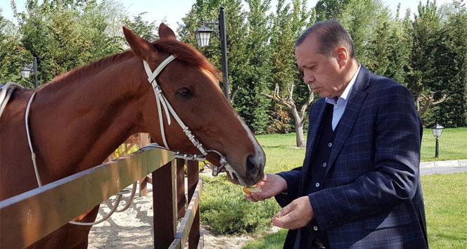 Başdanışmanı, Cumhurbaşkanı Erdoğanın ata binme fotoğraflarını paylaştı
