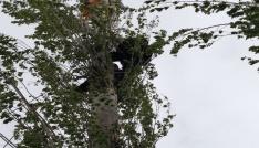 Kesmek için çıktığı ağaçta mahsur kaldı