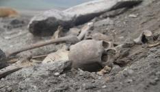 Ardahanda kafatası ve insan kemikleri bulundu