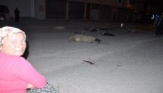 Kadirlide otomobil sürüye daldı, 25 küçükbaş hayvan telef oldu