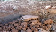 Peyzaj çalışmasında kullanılan topraktan arkeolojik malzemeler çıktı