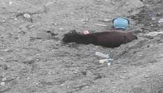Kulpta çamura saplanan ineği kurtarma operasyonu