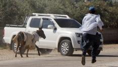 Adanada eşek kaçtı, sahibi kovaladı