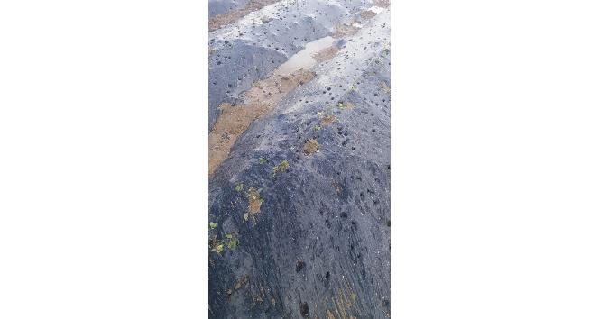 Erzincanda Dolu Tarım Arazilerine Büyük Zarar Verdi