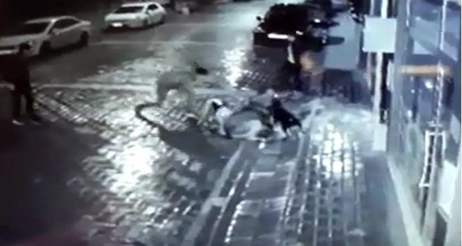 Manisa'da sokak köpeğine işkence