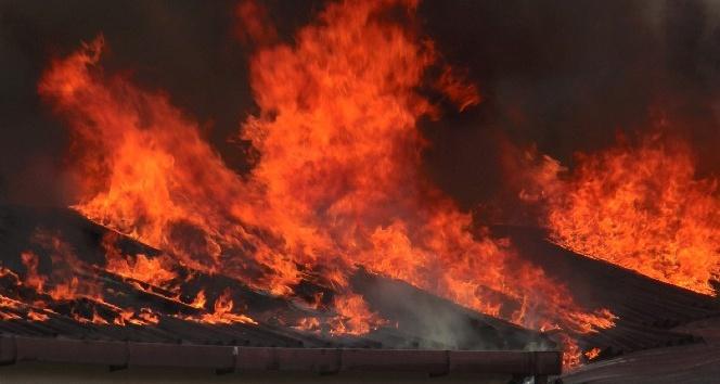 Birleşik Arap Emirlikleri'nin kurucusunun çiftliğinde yangın çıktı