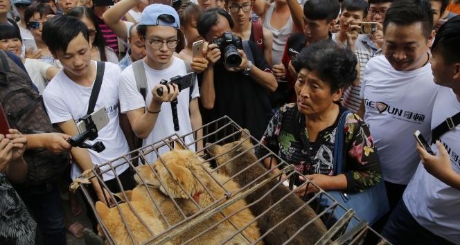 Çinde Yulin Köpek Eti Festivali yasaklandı