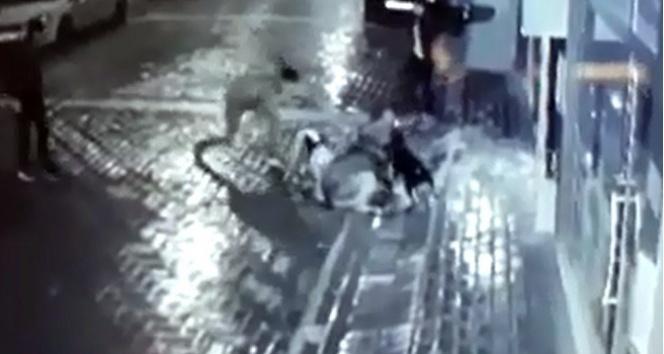 Manisada sokak köpeğine işkence| Önce pitbullla saldırttılar ardından bıçakladılar